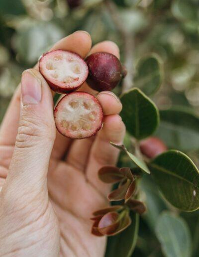 Erdbeer-Guave4